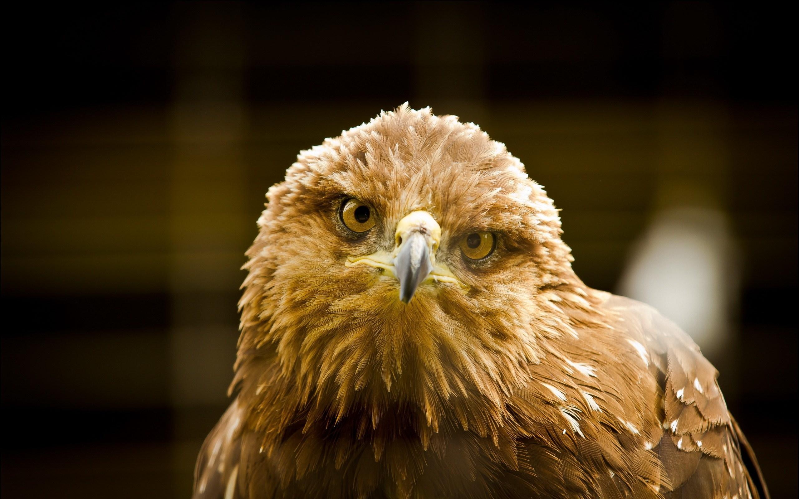 Eagle Bird Look