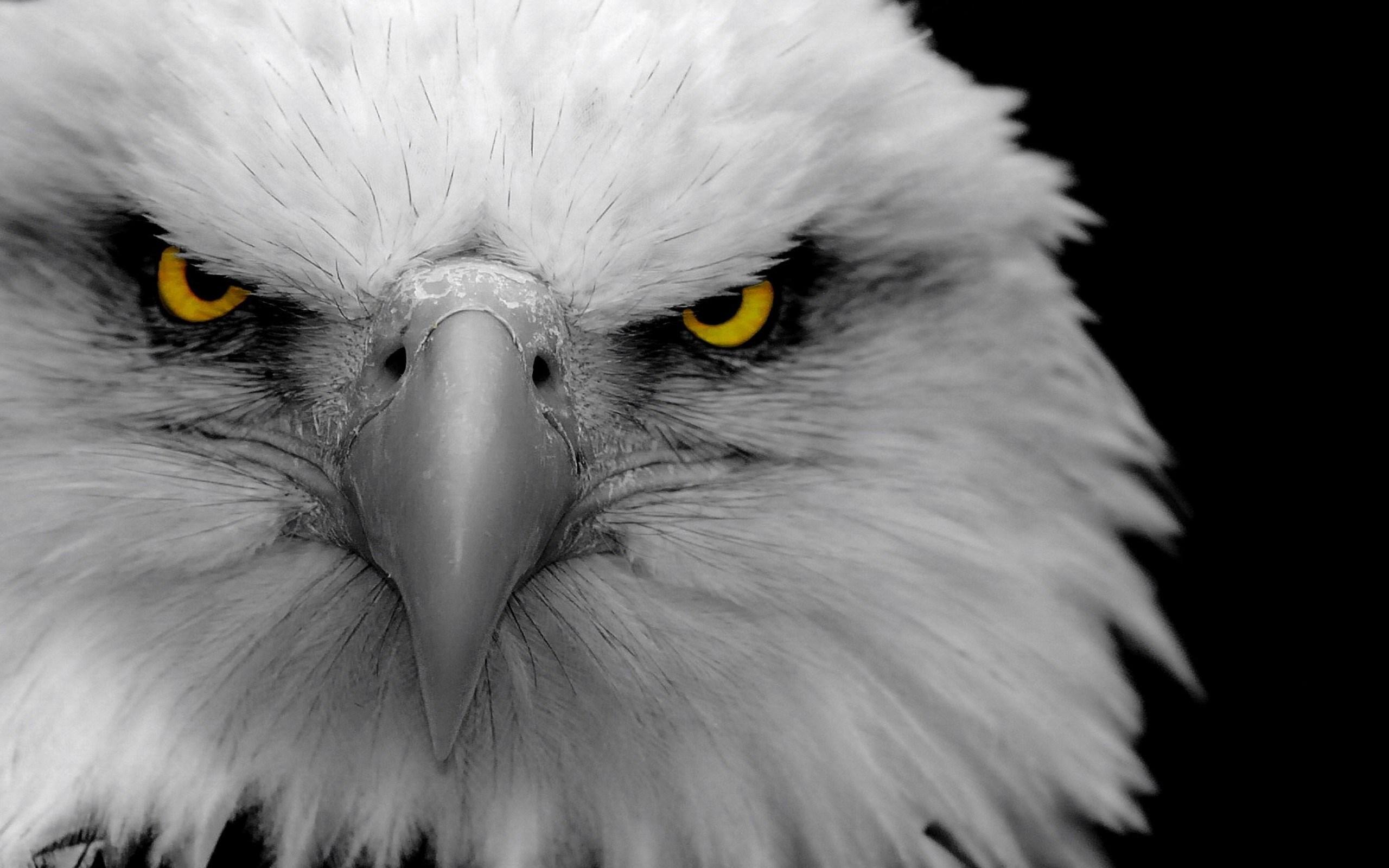 Eagle Up Close Wallpaper
