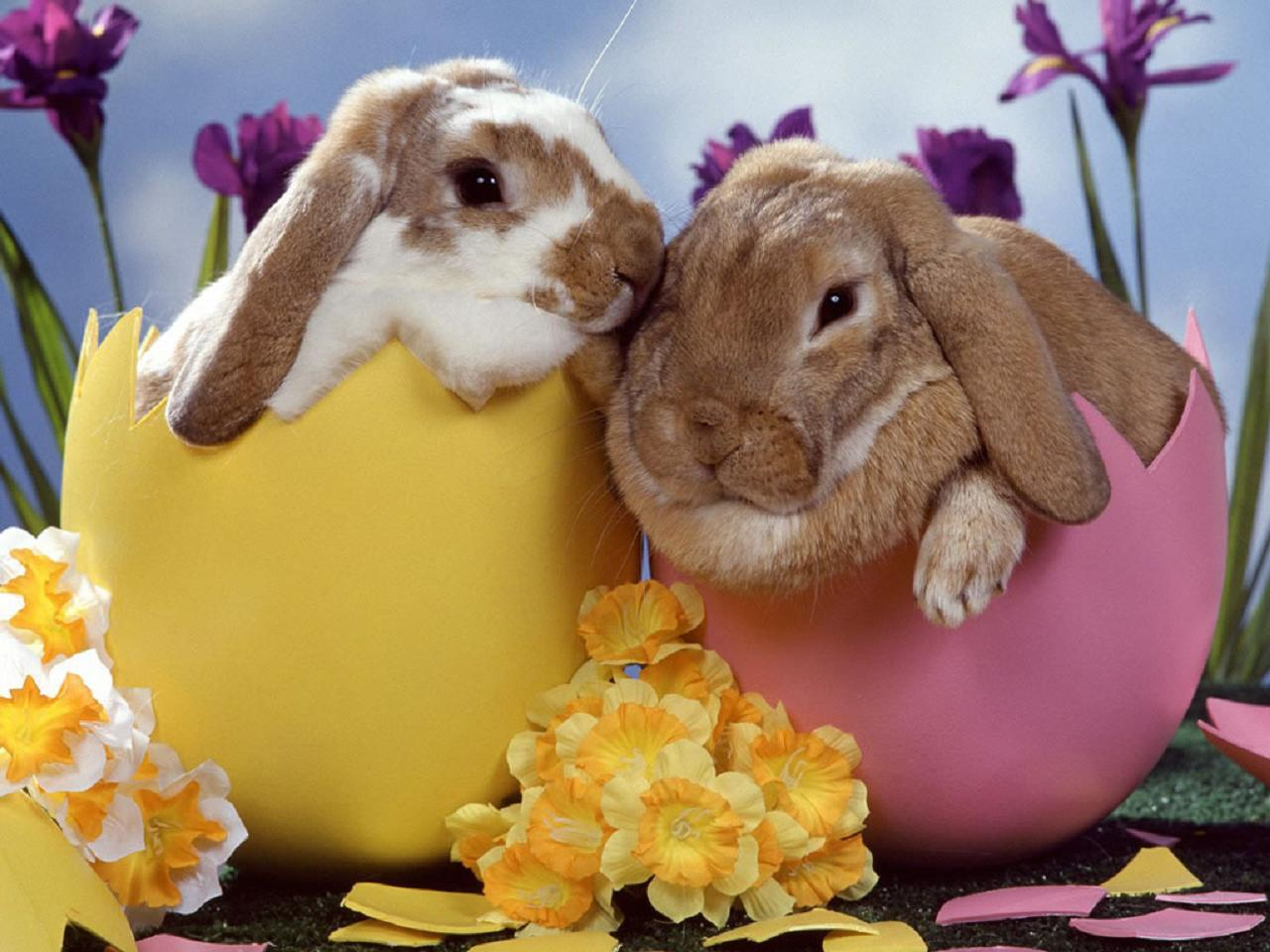 9. The Rabbit