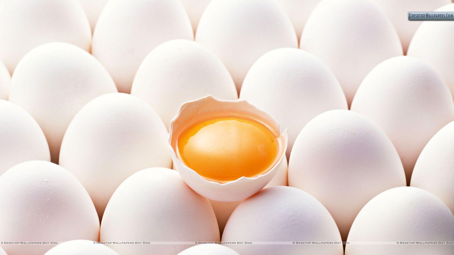 Egg Yolk vs.