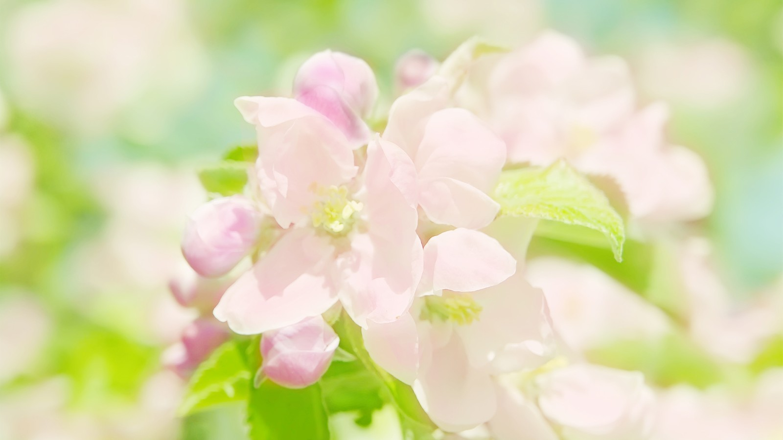 Elegant Flower photography : Dreamy Sweet Wildflowers Widescreen Wallpapers 1600x900第27
