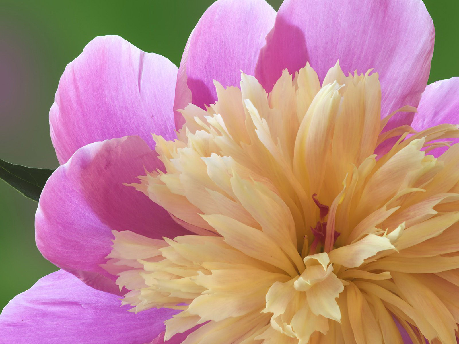Elegant Flowers 22066 1920x1080 px