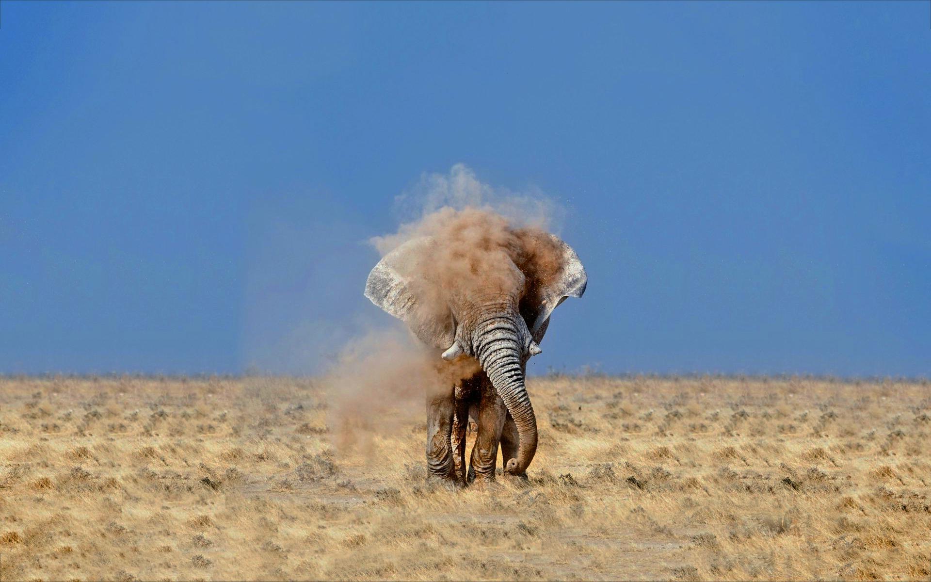 Elephant shake dust