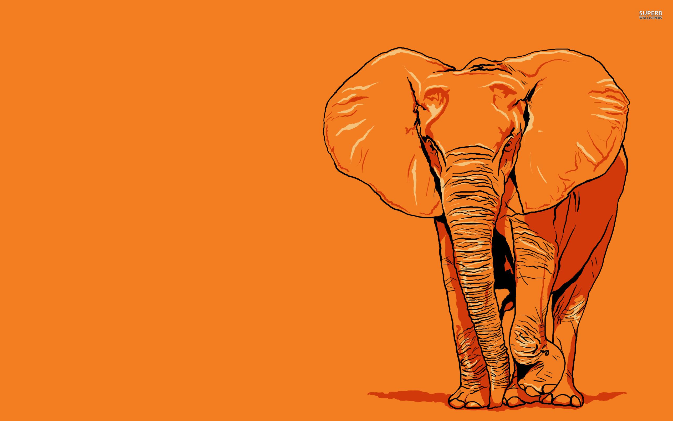 Elephant wallpaper 2560x1600 jpg