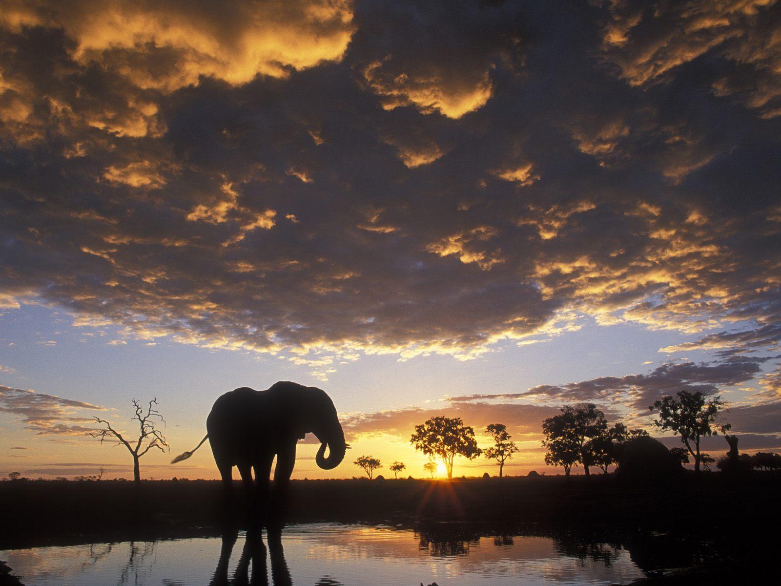 Animals for Gt Elephant Wallpaper Desktop