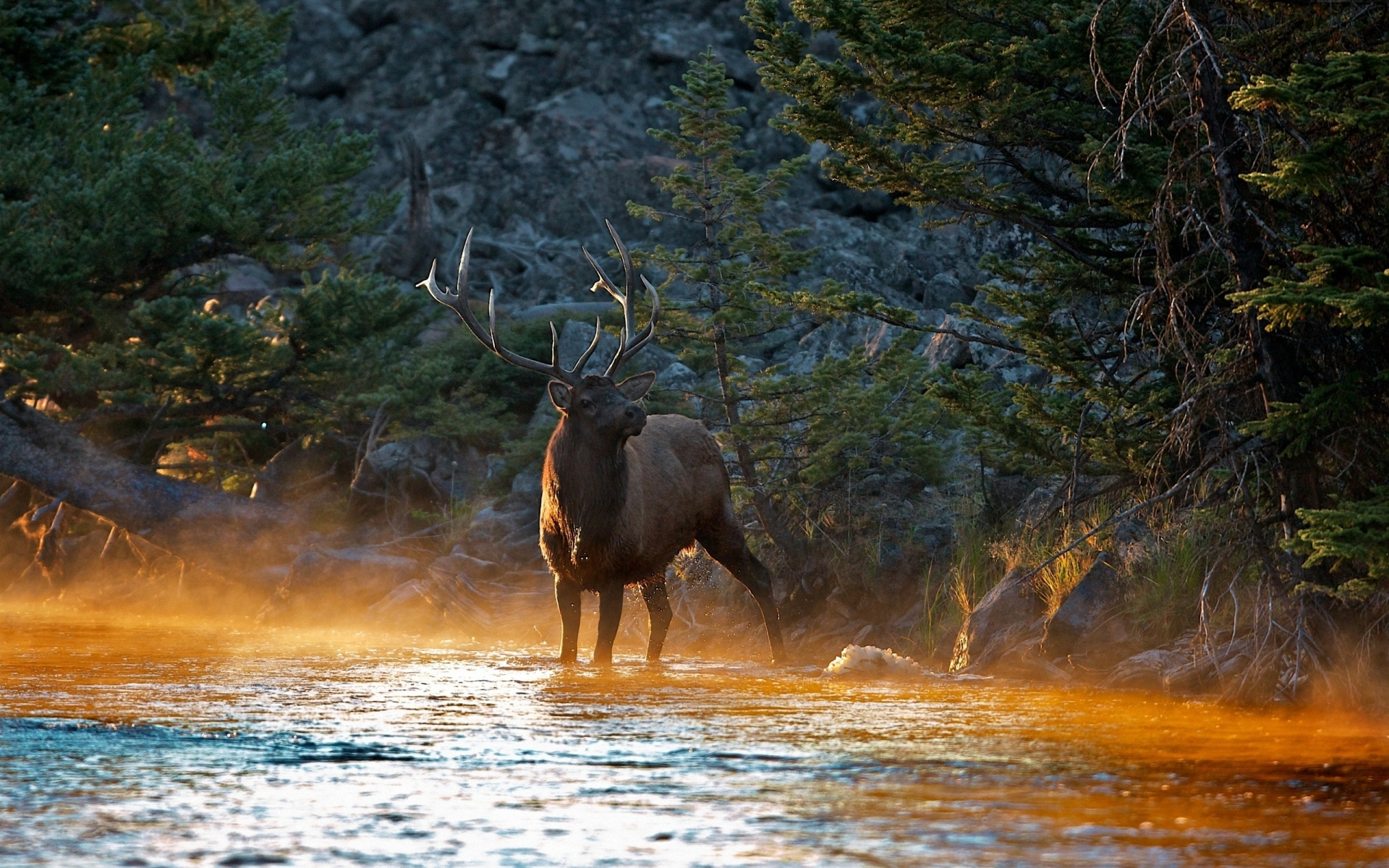 HD Wallpaper | Background ID:276000. 1920x1200 Animal Elk