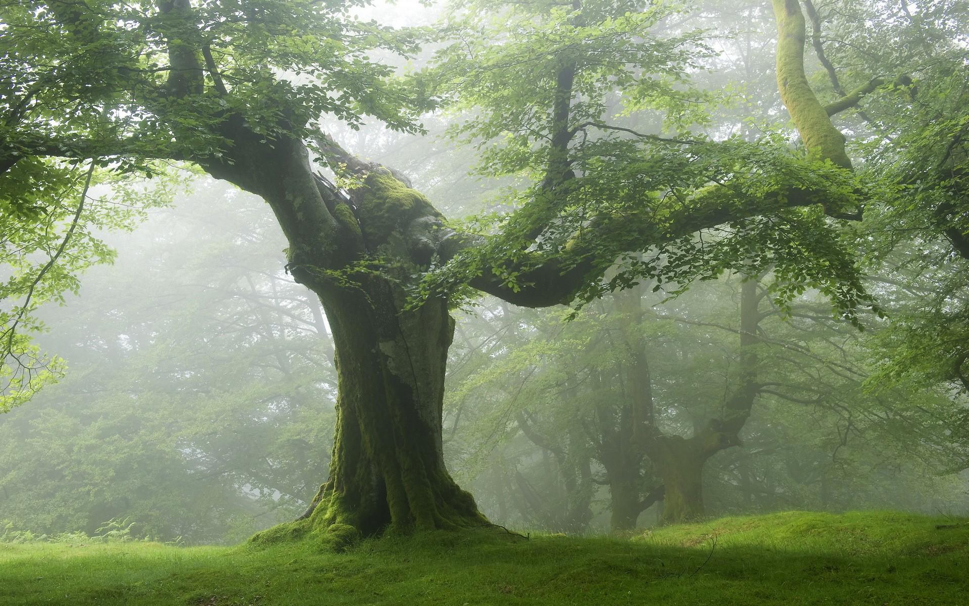 Enchanted tree scenery