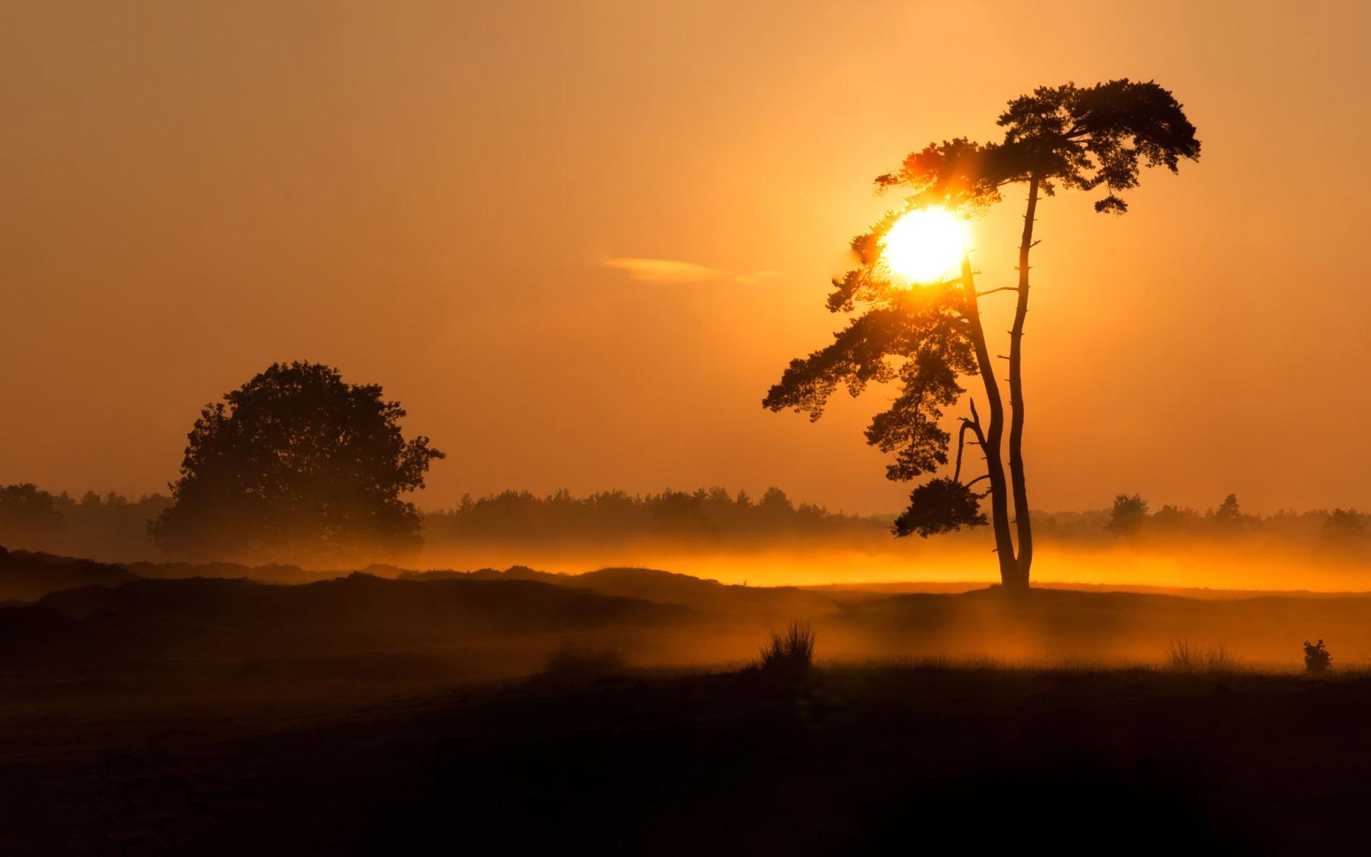 Evening foggy sunset