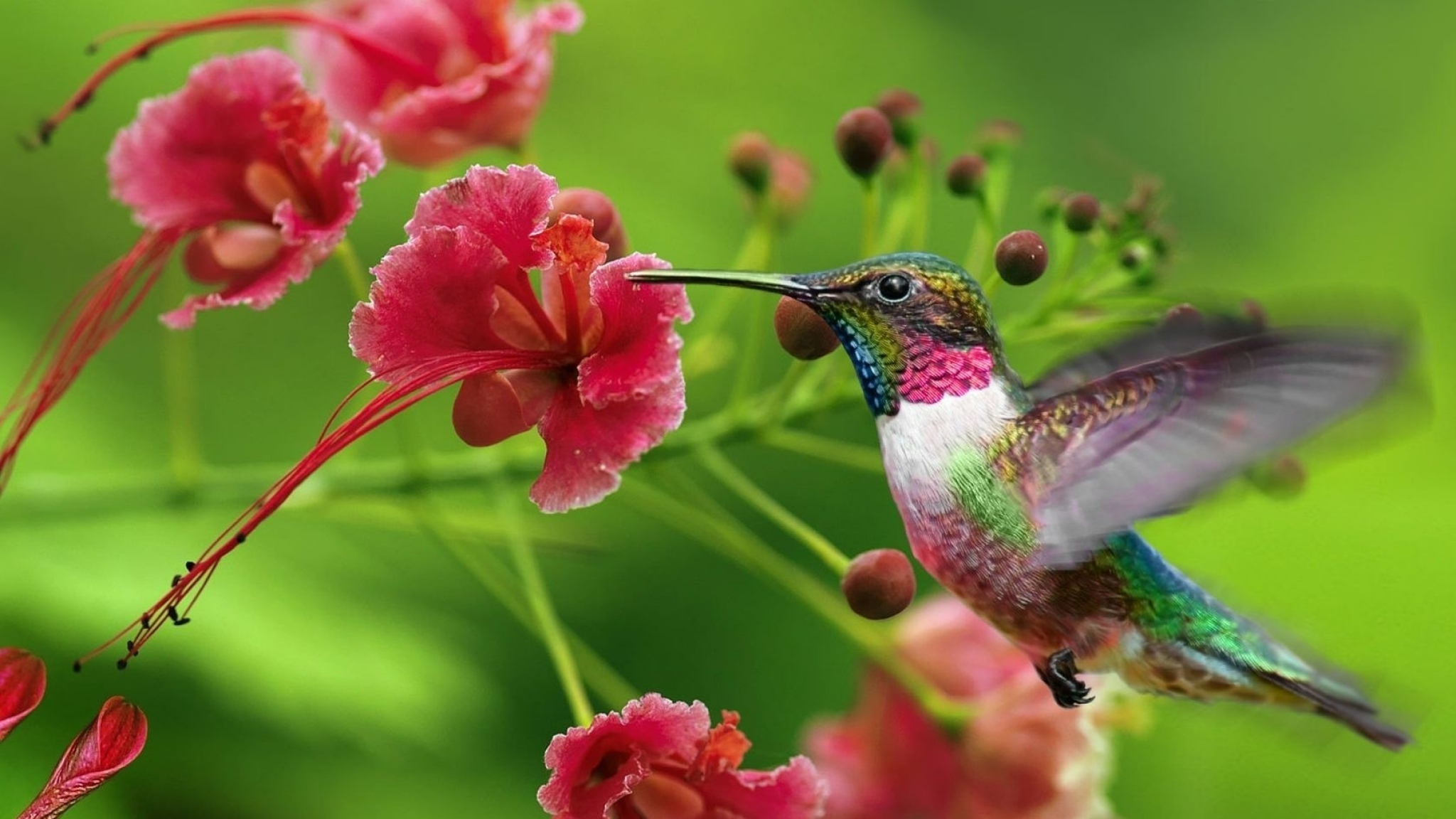 2048x1152 Wallpaper hummingbirds, exotic flower, swing