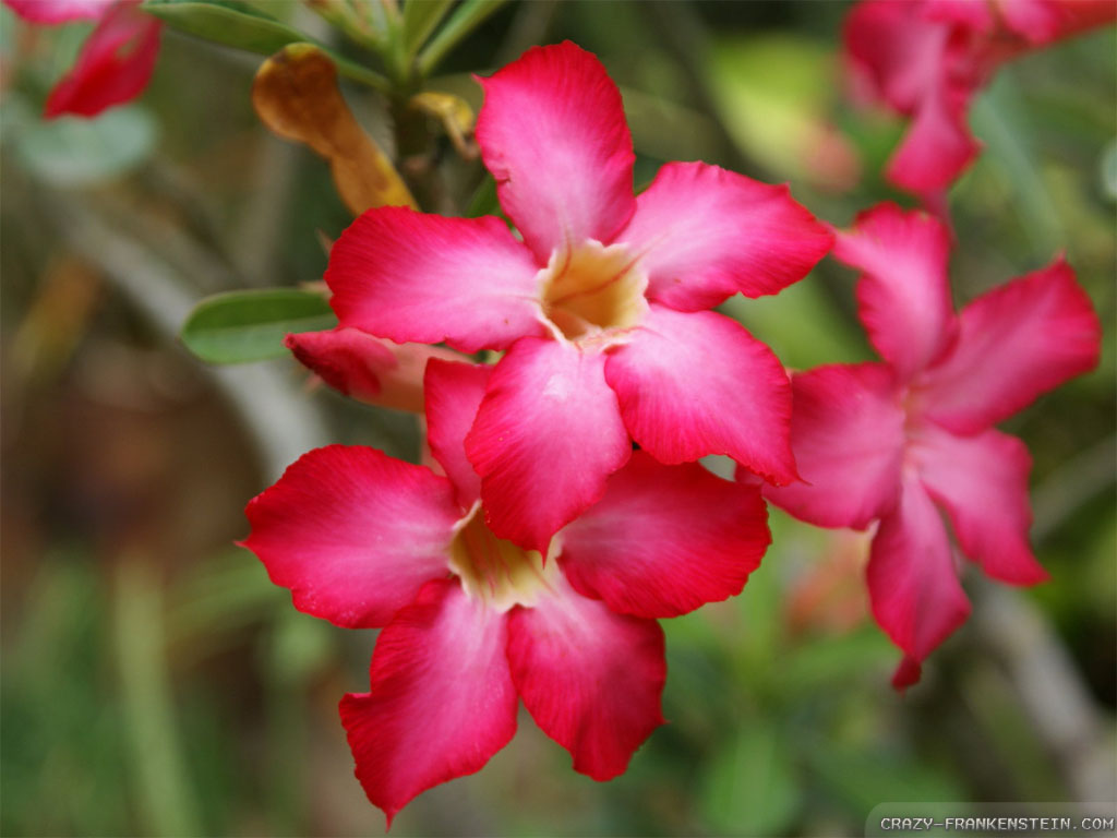 Pink Exotic Flowers Wallpapers
