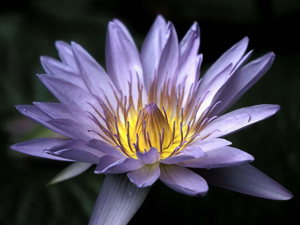 Exotic Flowers Images 29 HD Wallpapers