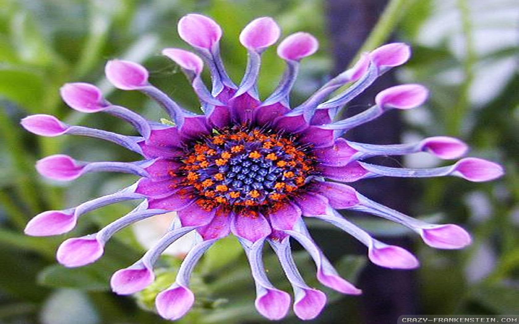 exotic-flowers-wallpapers-6.jpg 1,680×1,050 pixels | Gorgeous Flowers & Arrangements | Pinterest