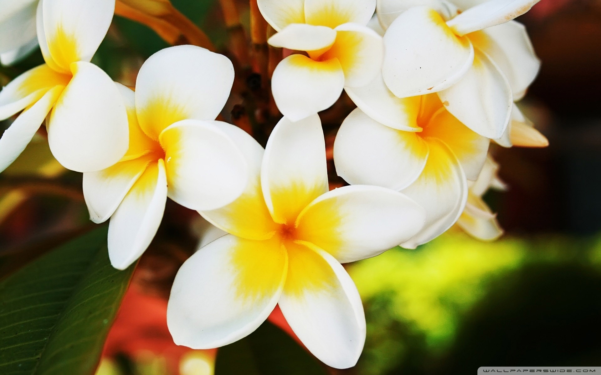 Exotic Flowers Wallpaper