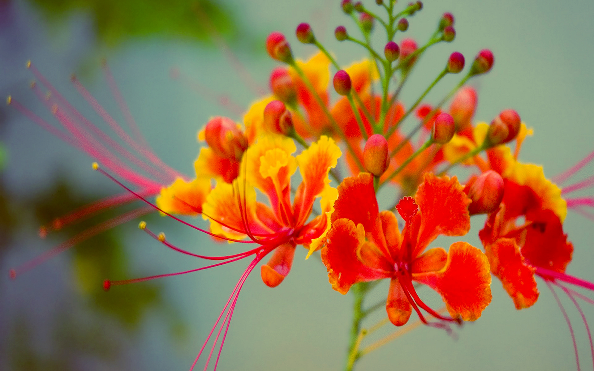 exotic orange flower wallpaper  x, Beautiful flower