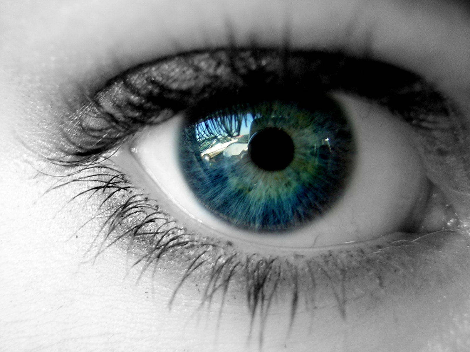 The number one cause of blindness in adults in the United States is diabetes.