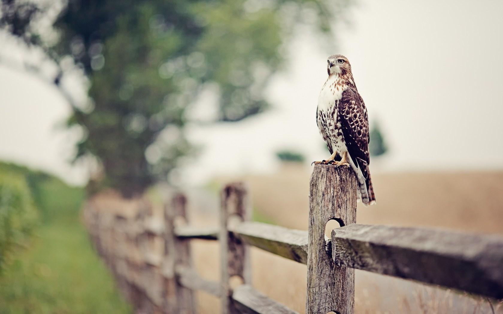 Falcon Eagle Bird Fence