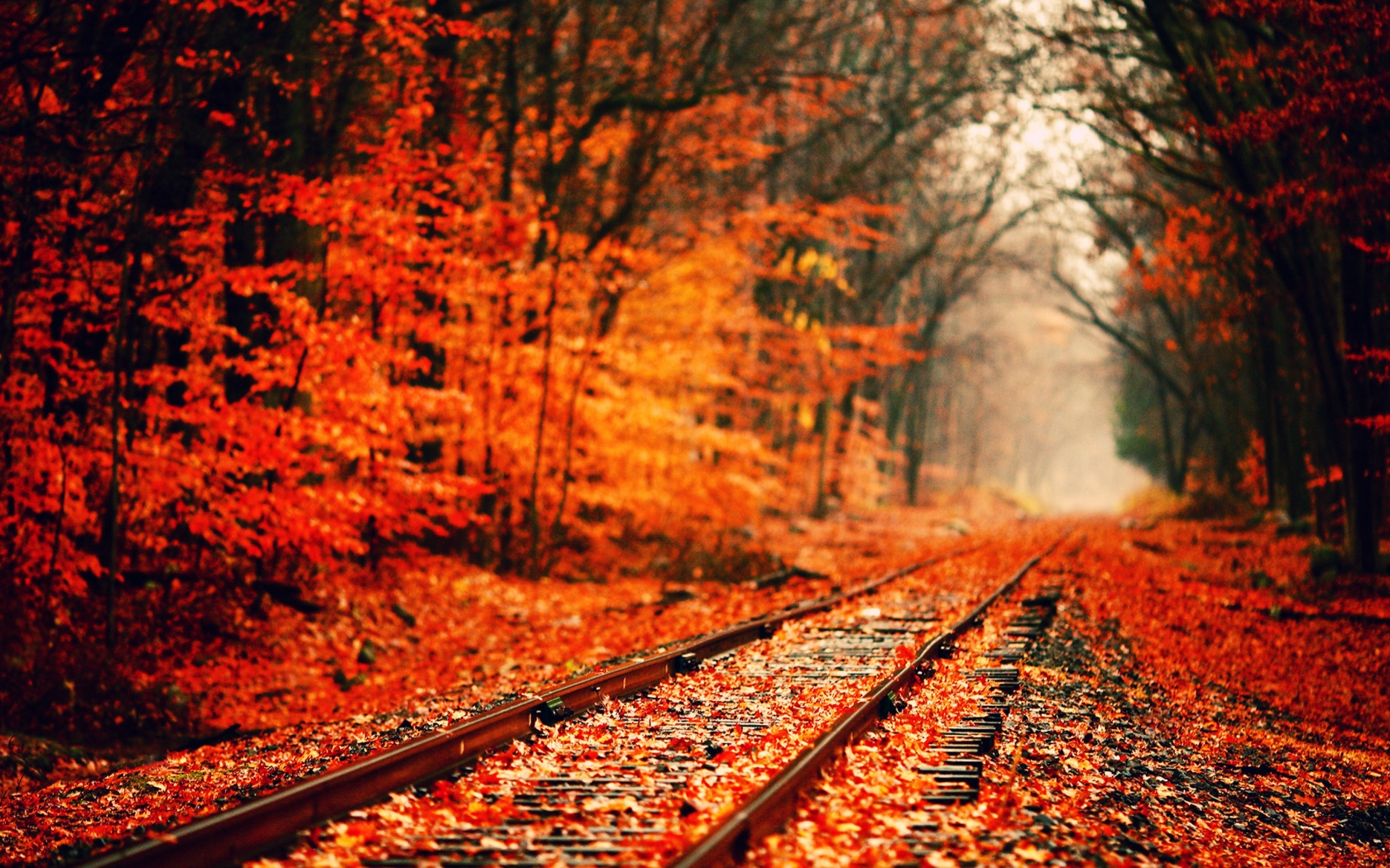 Fall Wallpaper 15881 1680x1050 px