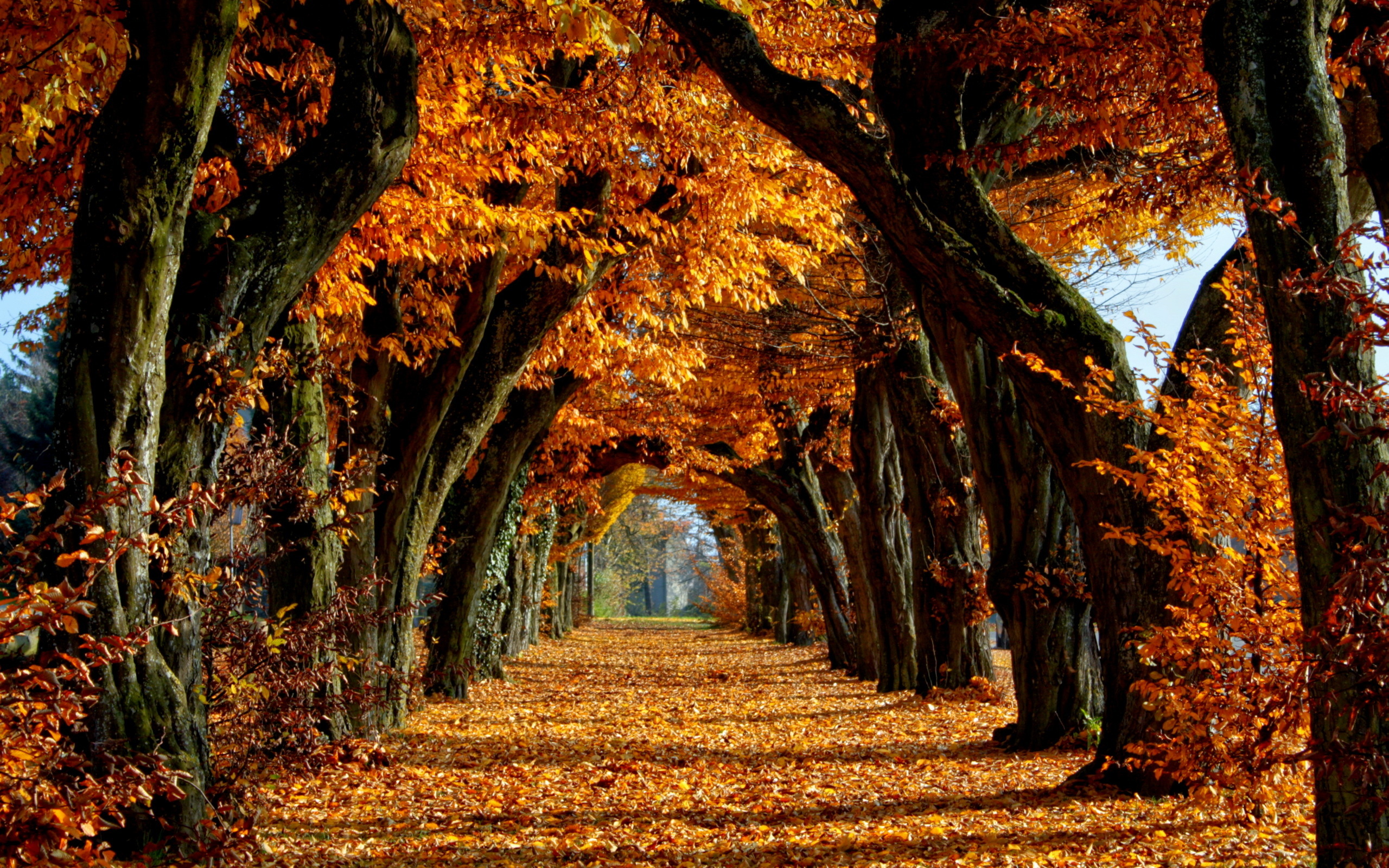 Fall Wallpaper 15877 2560x1600 px