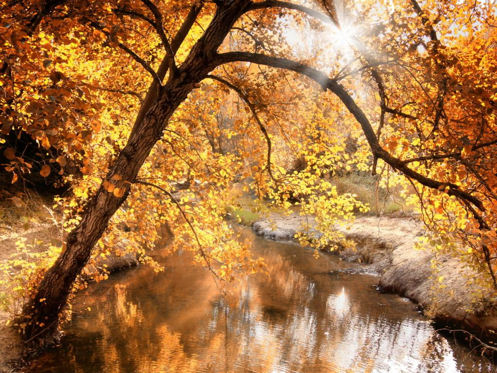 Fall Creek Wallpaper