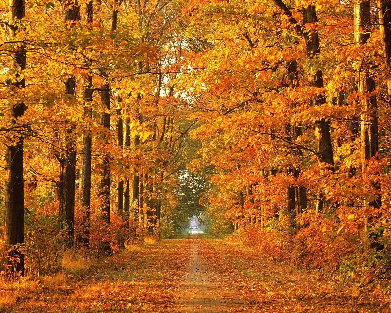 Autumn Wallpapers In HD