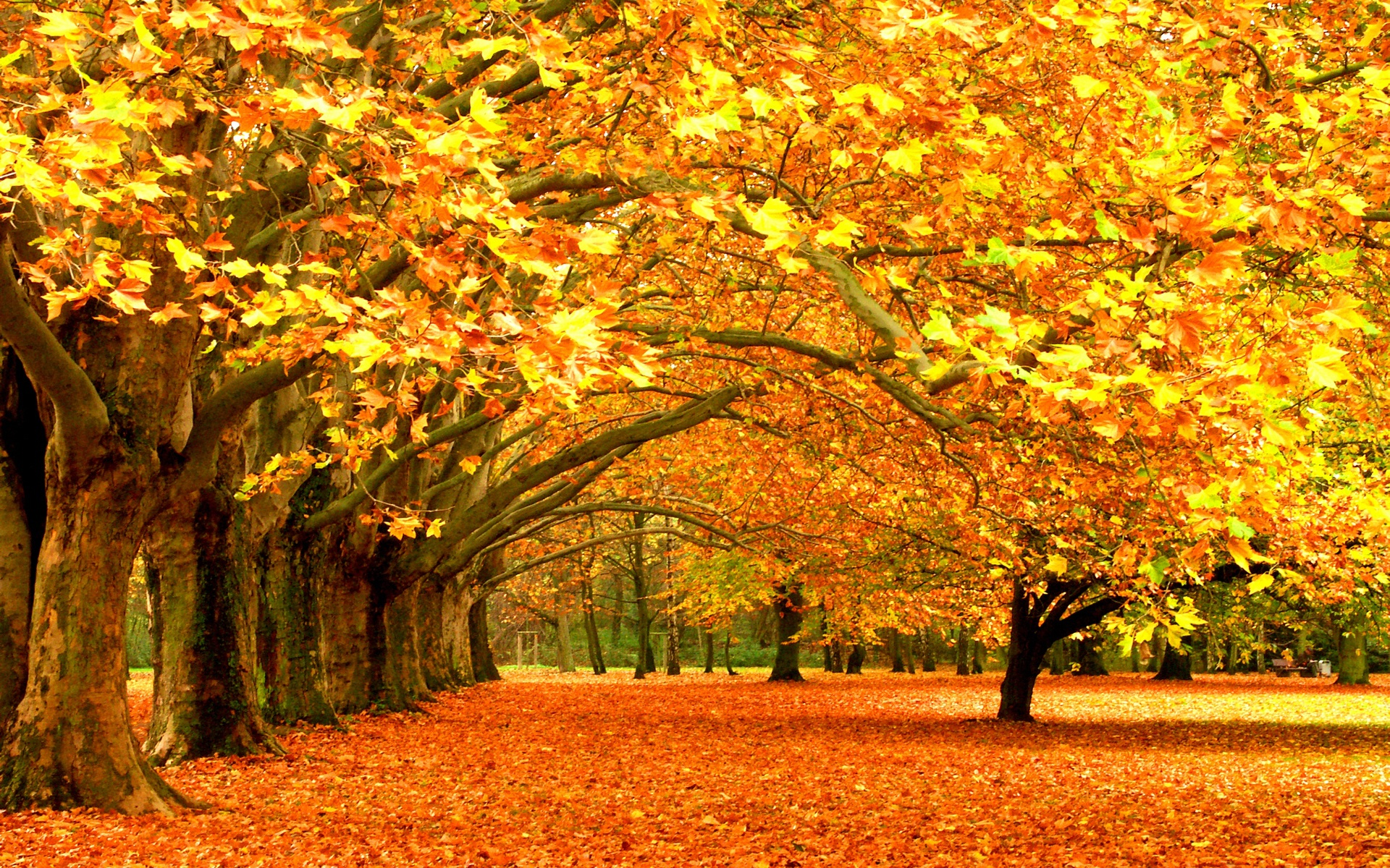 Fall Trees Wallpaper