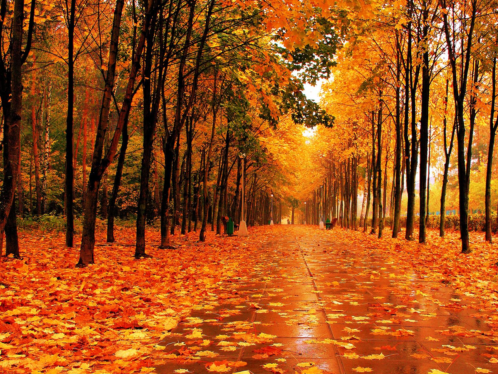 Fall Wallpaper 744 Wallpapers Desktop