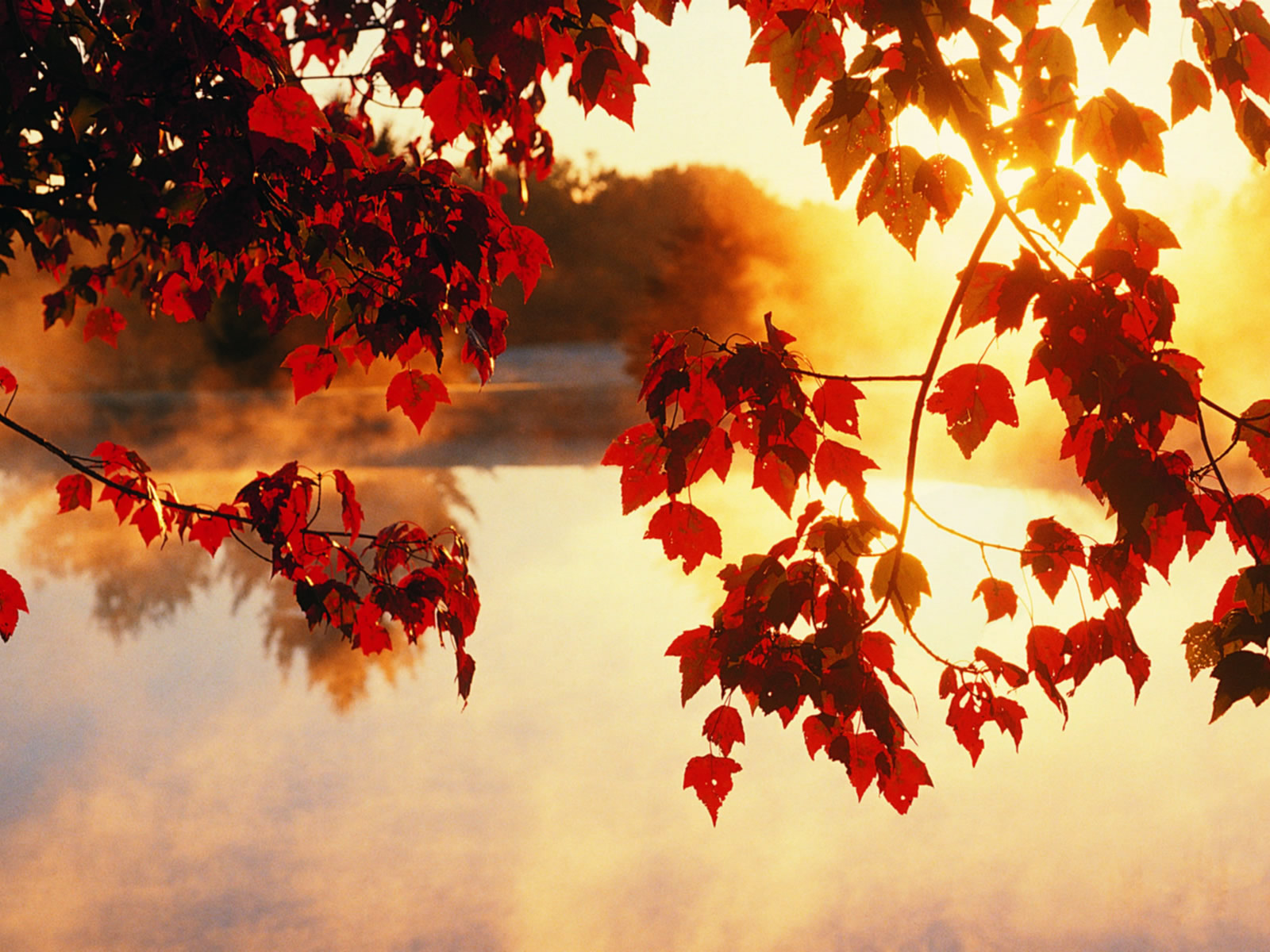 Fall Wallpaper 880 Free Cool