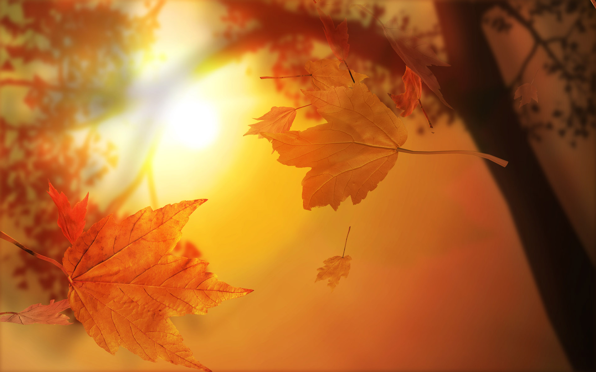 Fall Wallpaper 18