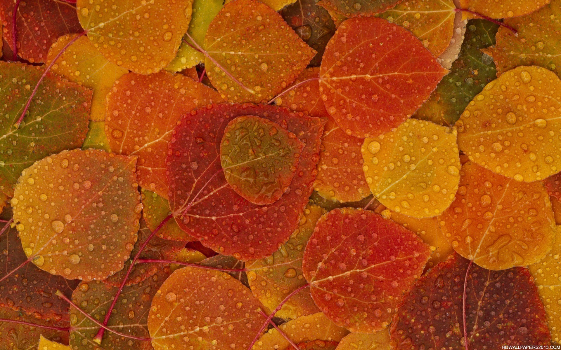 Fall Wallpaper Leave Hd