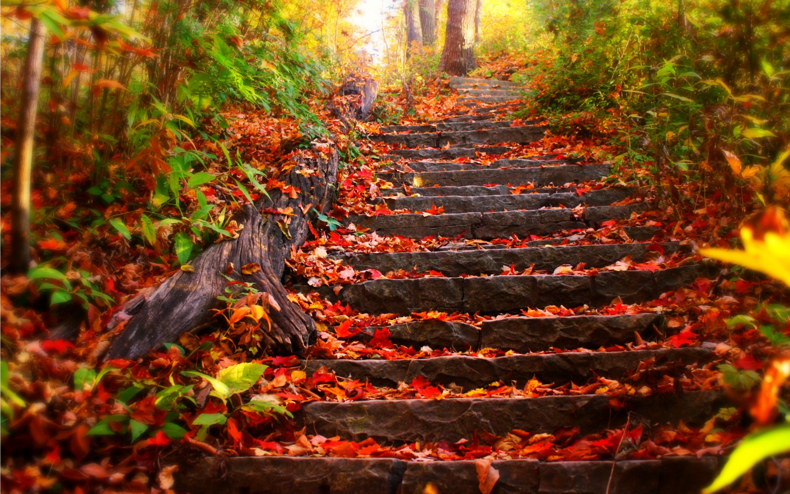 Fall Wallpaper 313 Images Best