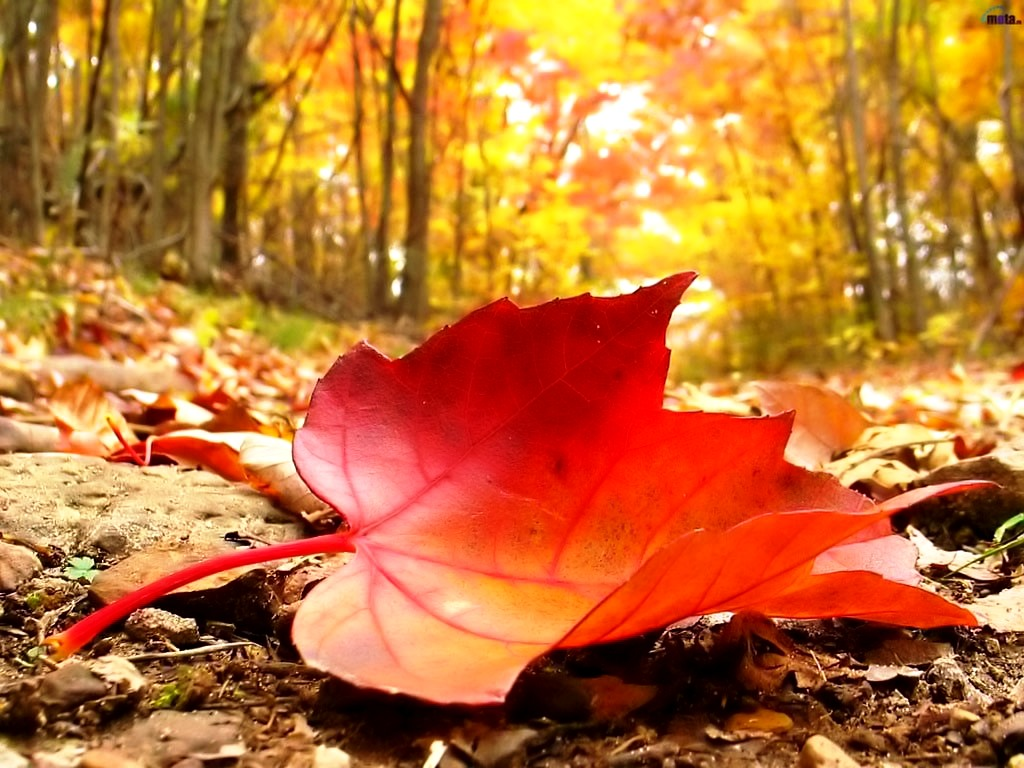 Fall Leaves Desktop Background Fallen Leaves On The Ground photos of Autumn Images for Your Desktop Background