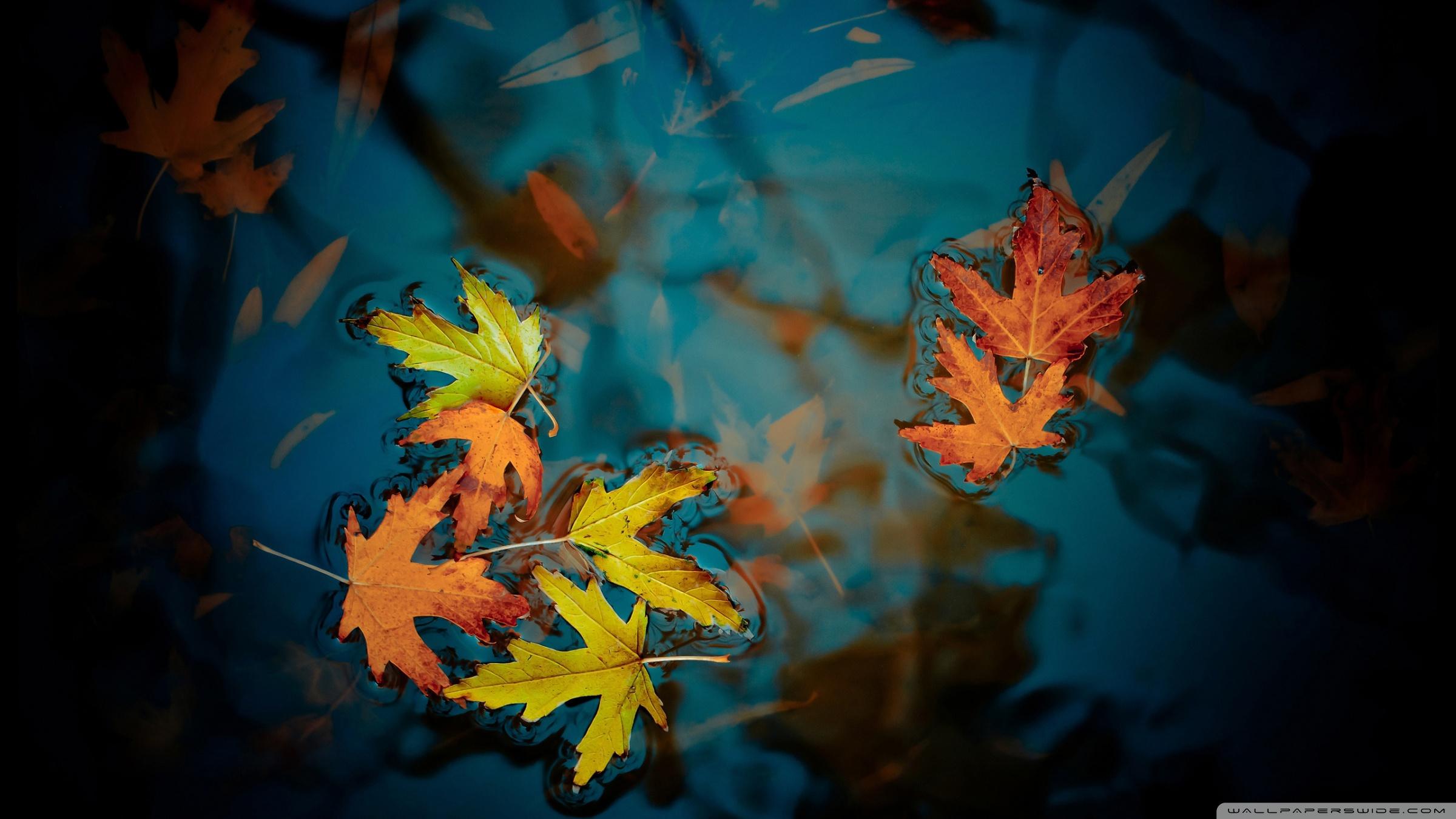 Fallen Leaves Wallpaper