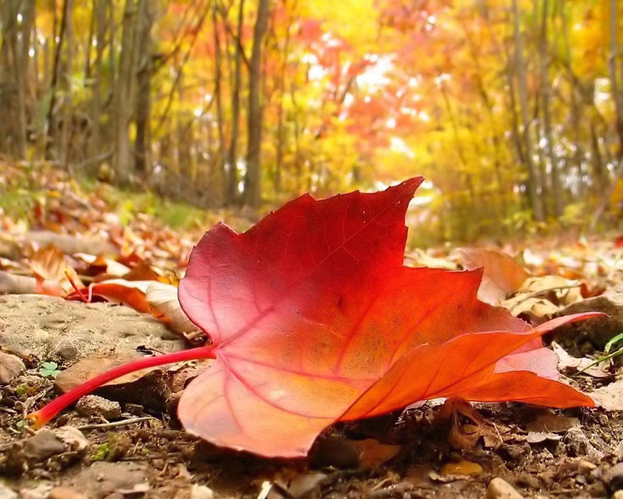 Autumn Falling Leaf