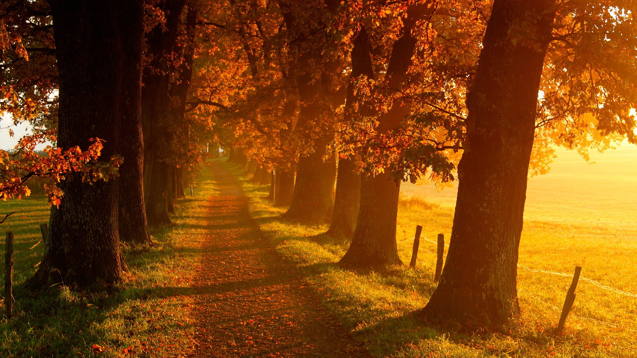 Fantastic Autumn Landscape Wallpaper