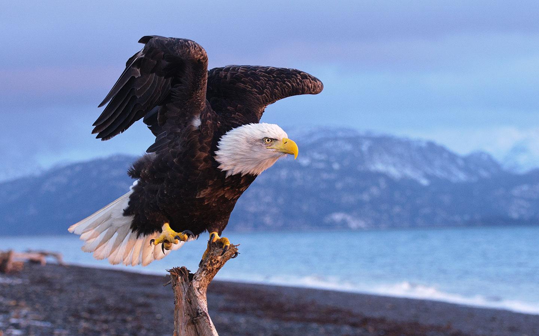 Fantastic Eagle Wallpaper