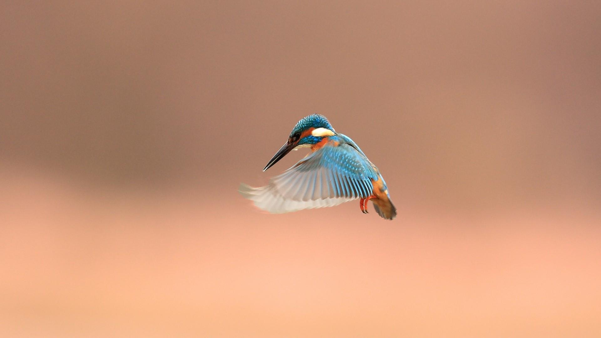 ... Fantastic Flight Wallpaper ...