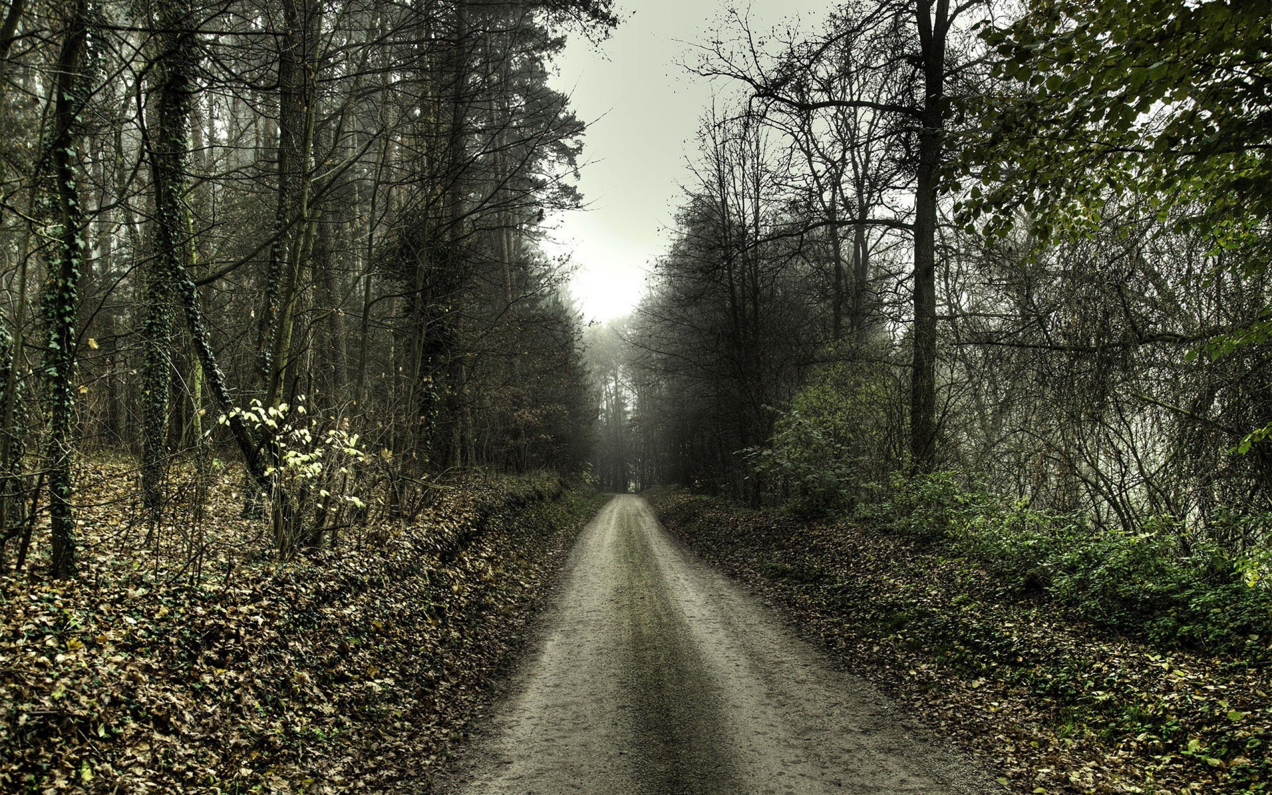 Fantastic Forest Road Wallpaper