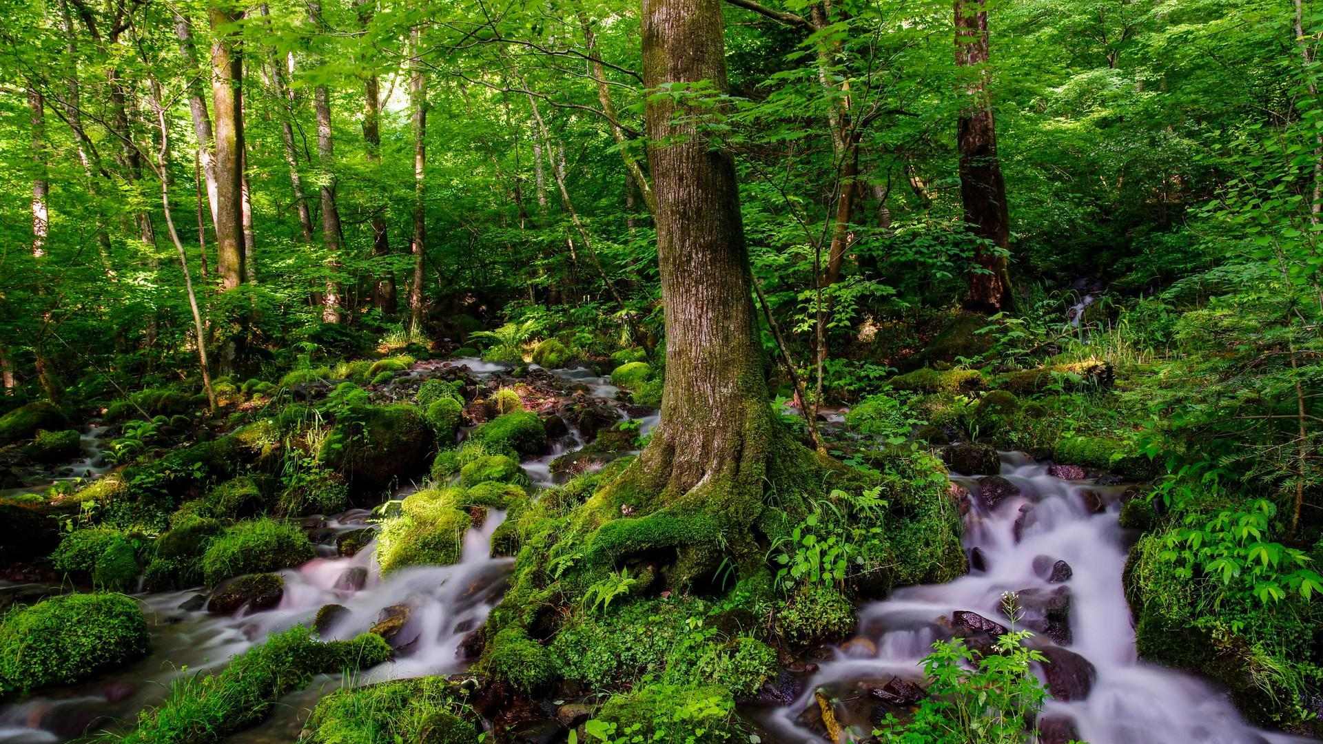 Fantastic forest stream HQ WALLPAPER - (#140054)