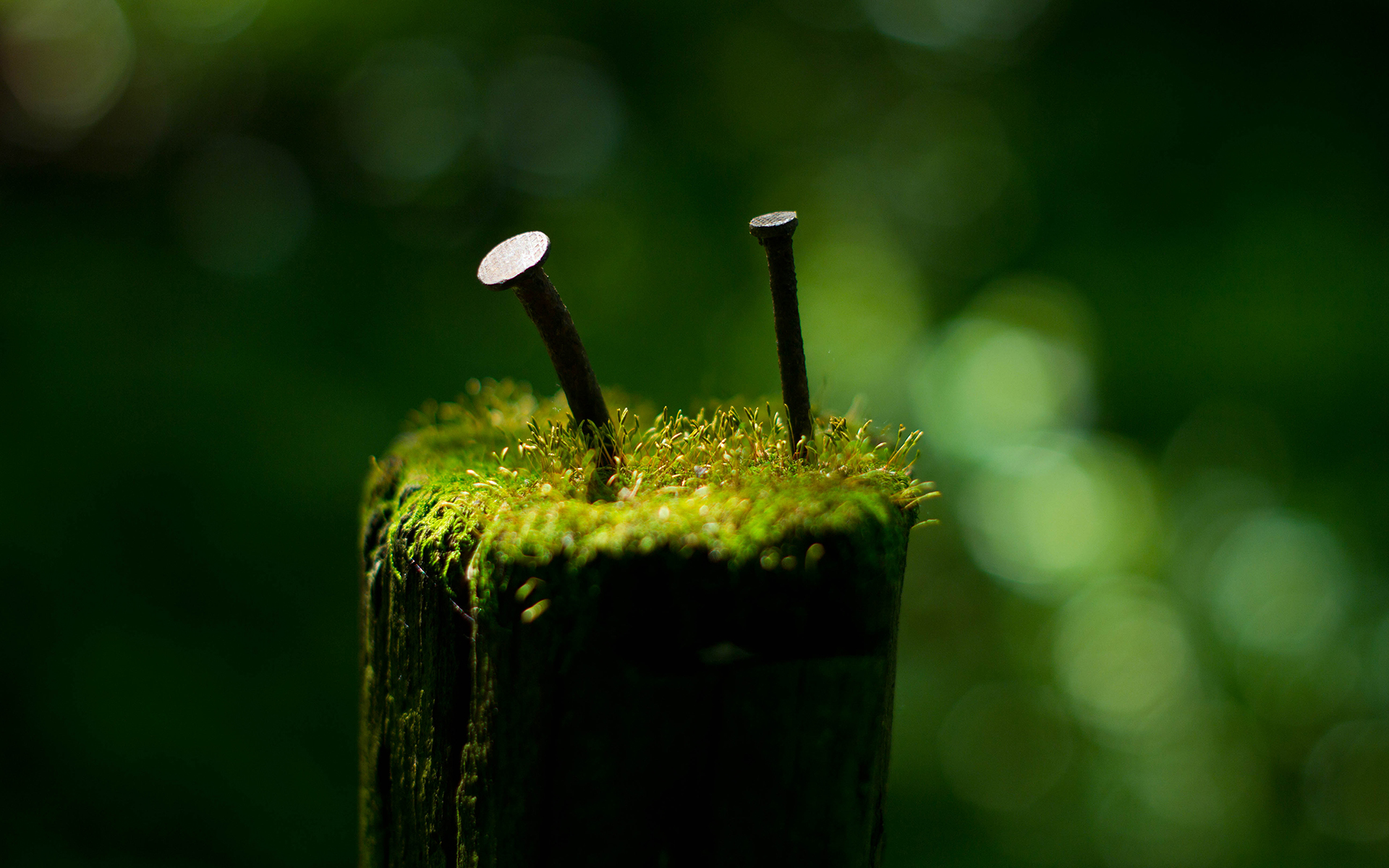 Fantastic Green Macro Wallpaper