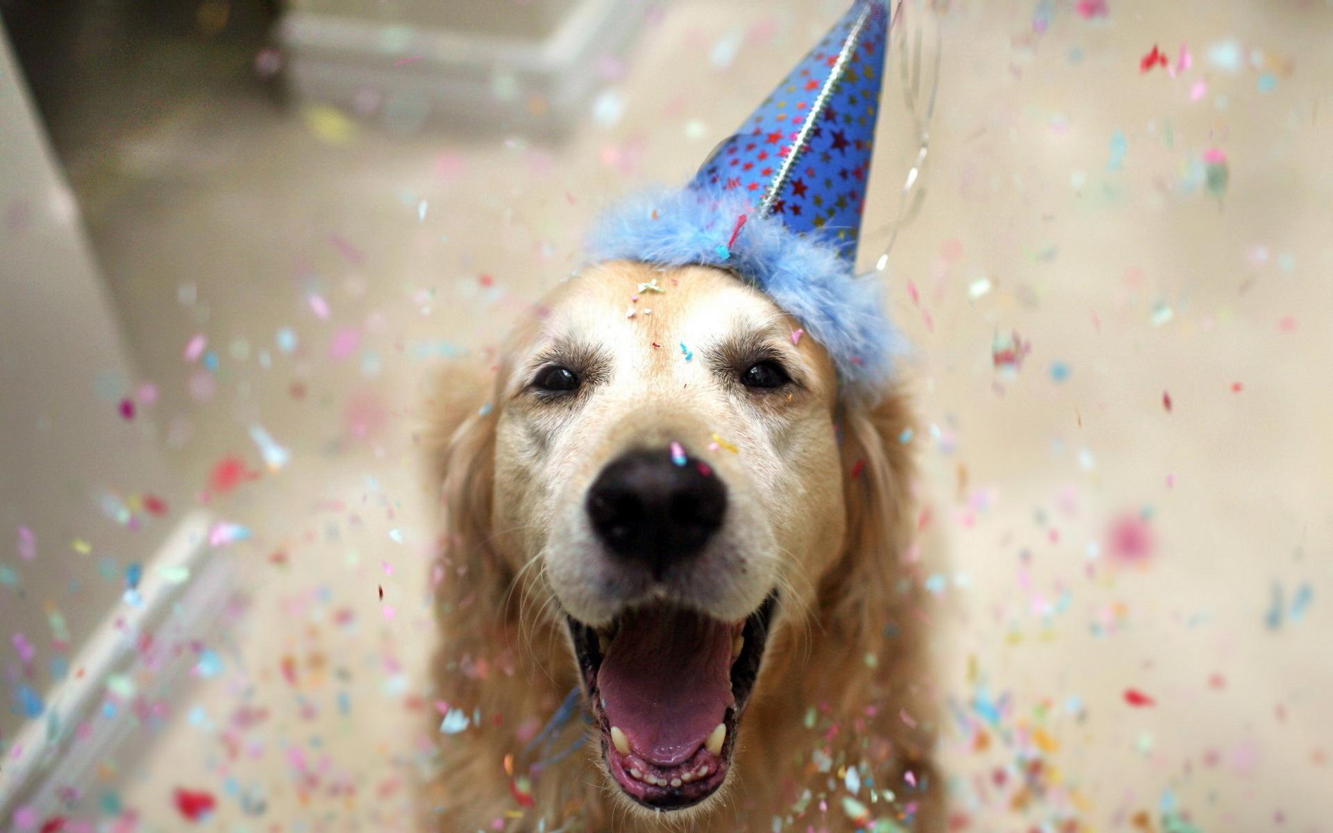 Fantastic Happy Dog Wallpaper
