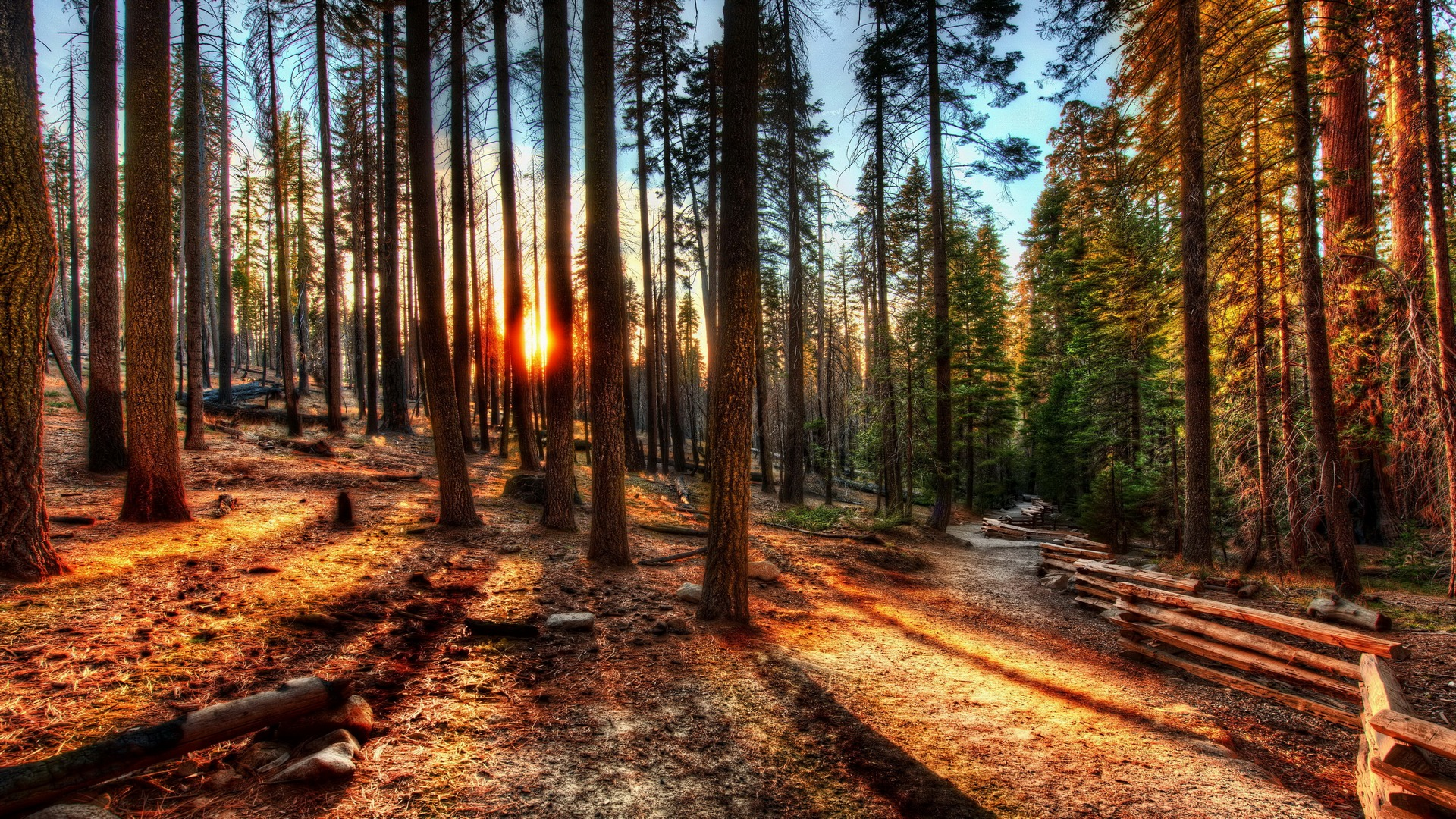 Fantastic HDR Forest Wallpaper