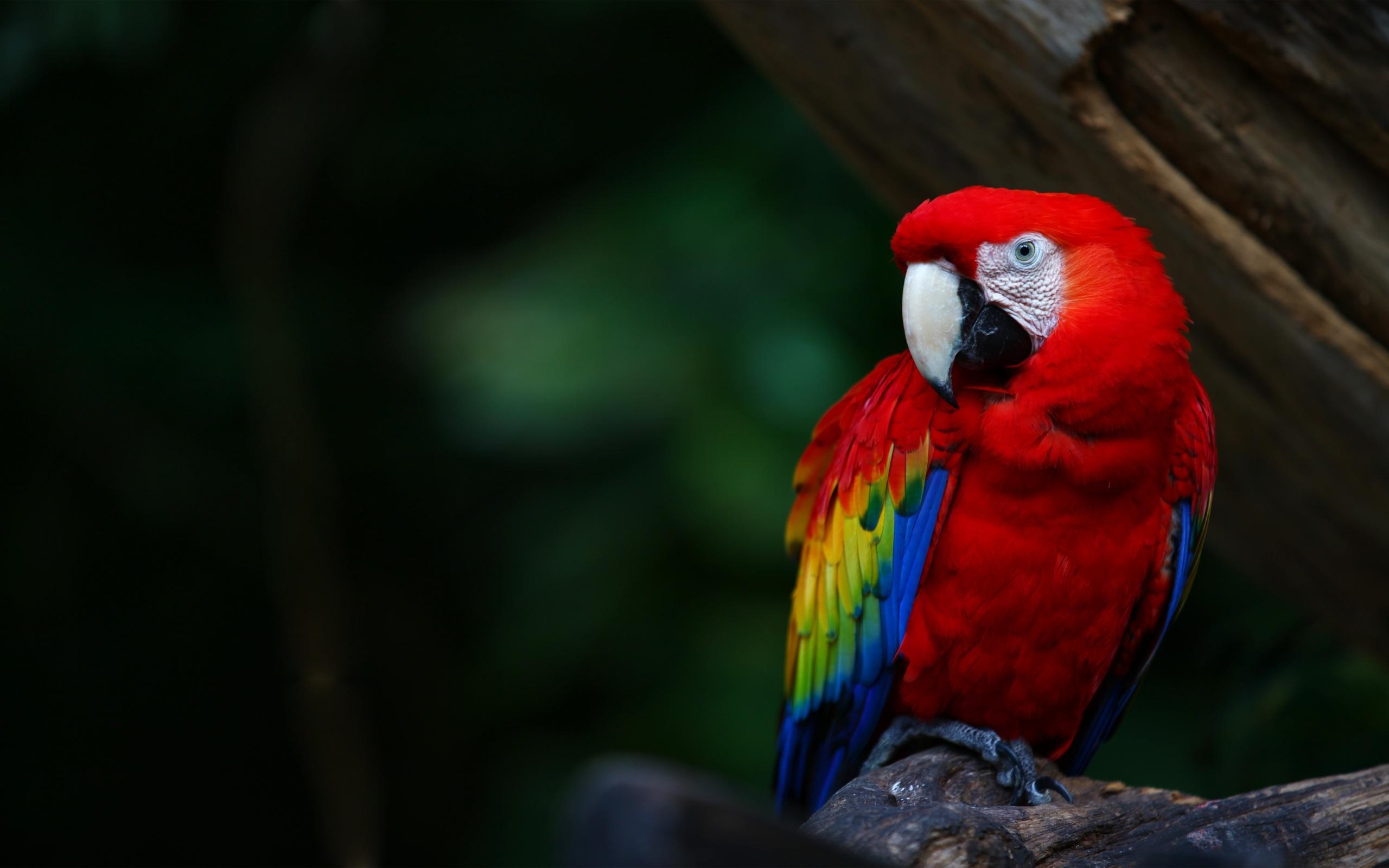 Fantastic Macaw Wallpaper