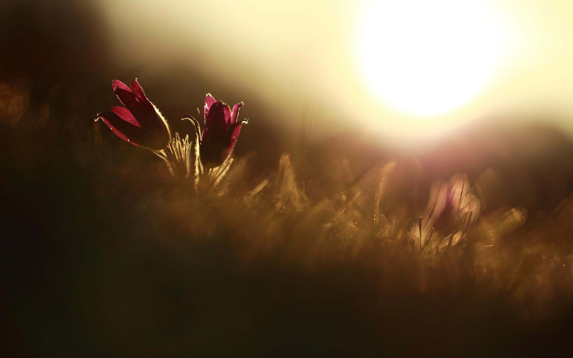 Fantastic Macro Flowers
