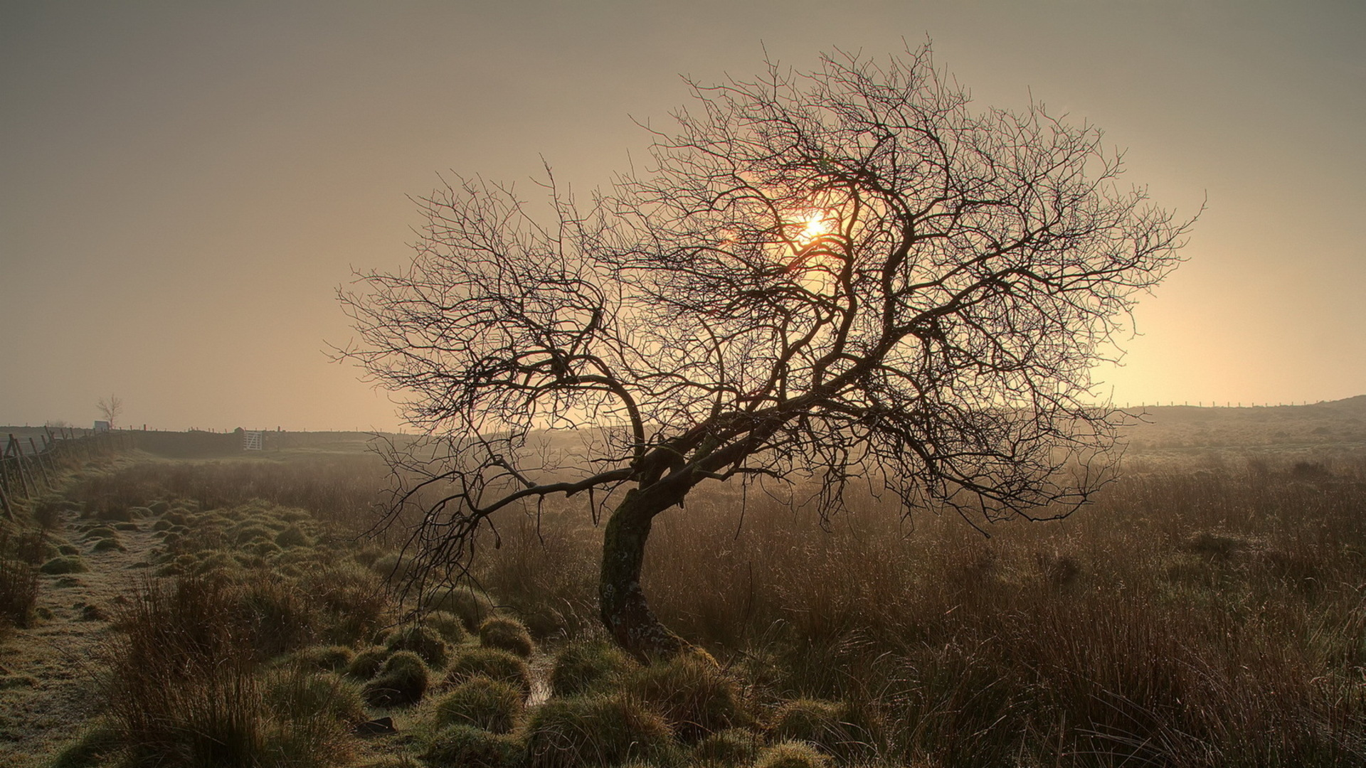 Fantastic Twisted Tree In A Misty Field Hd Desktop Background HD wallpapers