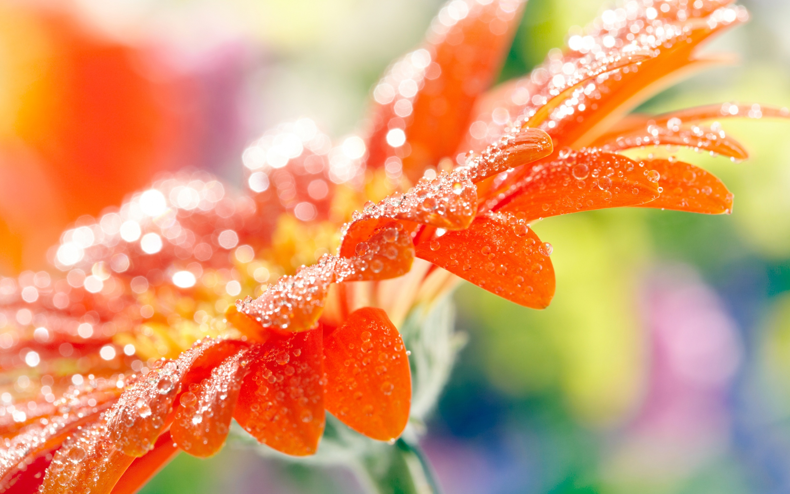 Fantastic Orange Macro Wallpaper