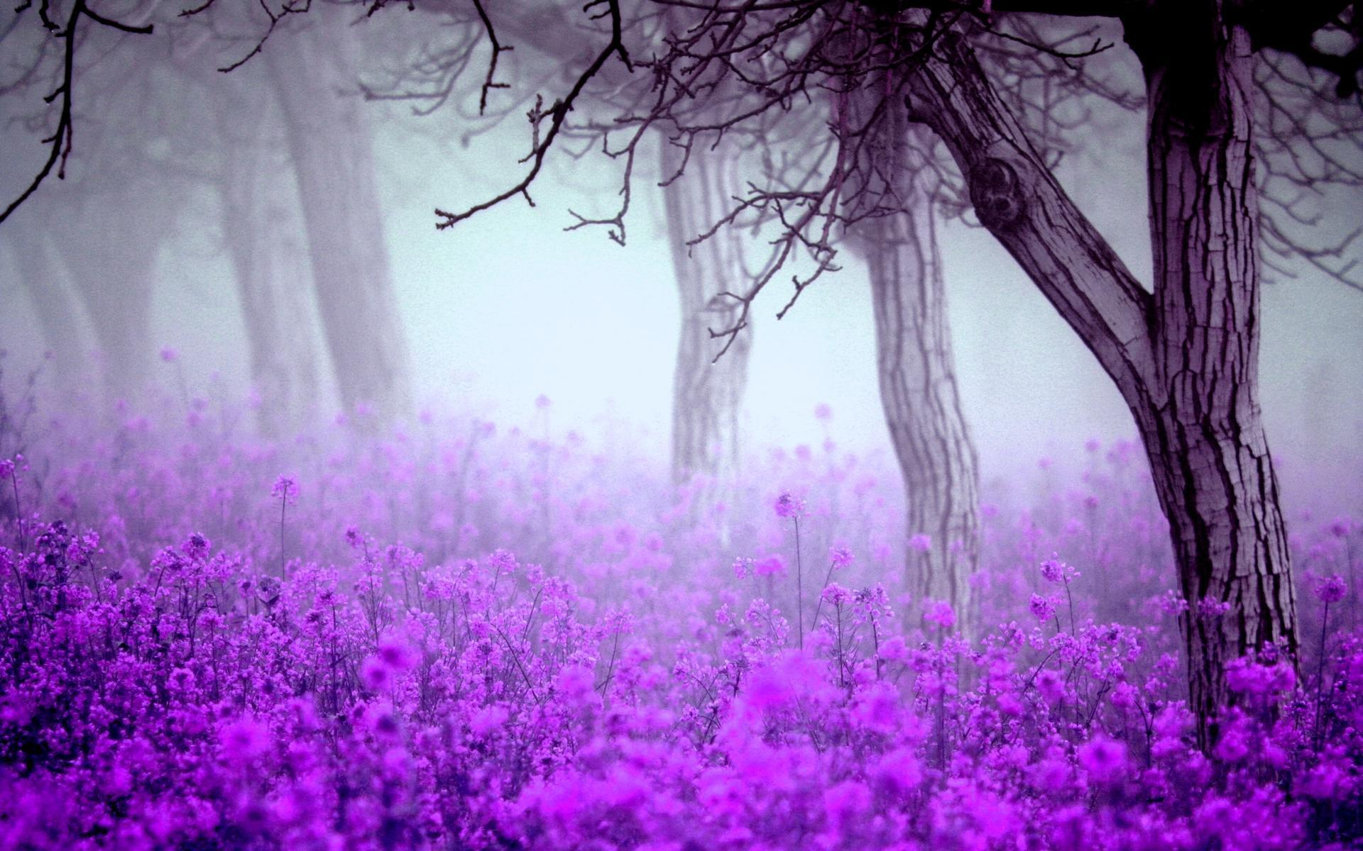 Fantastic Purple Flowers Wallpaper