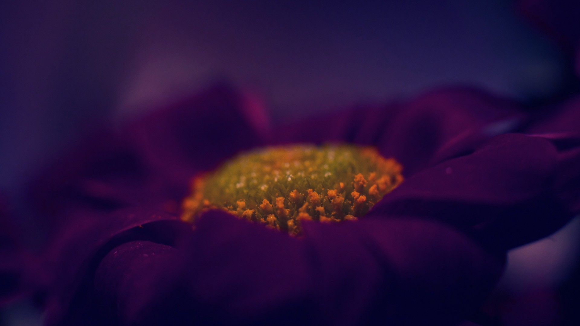Fantastic Purple Macro Wallpaper