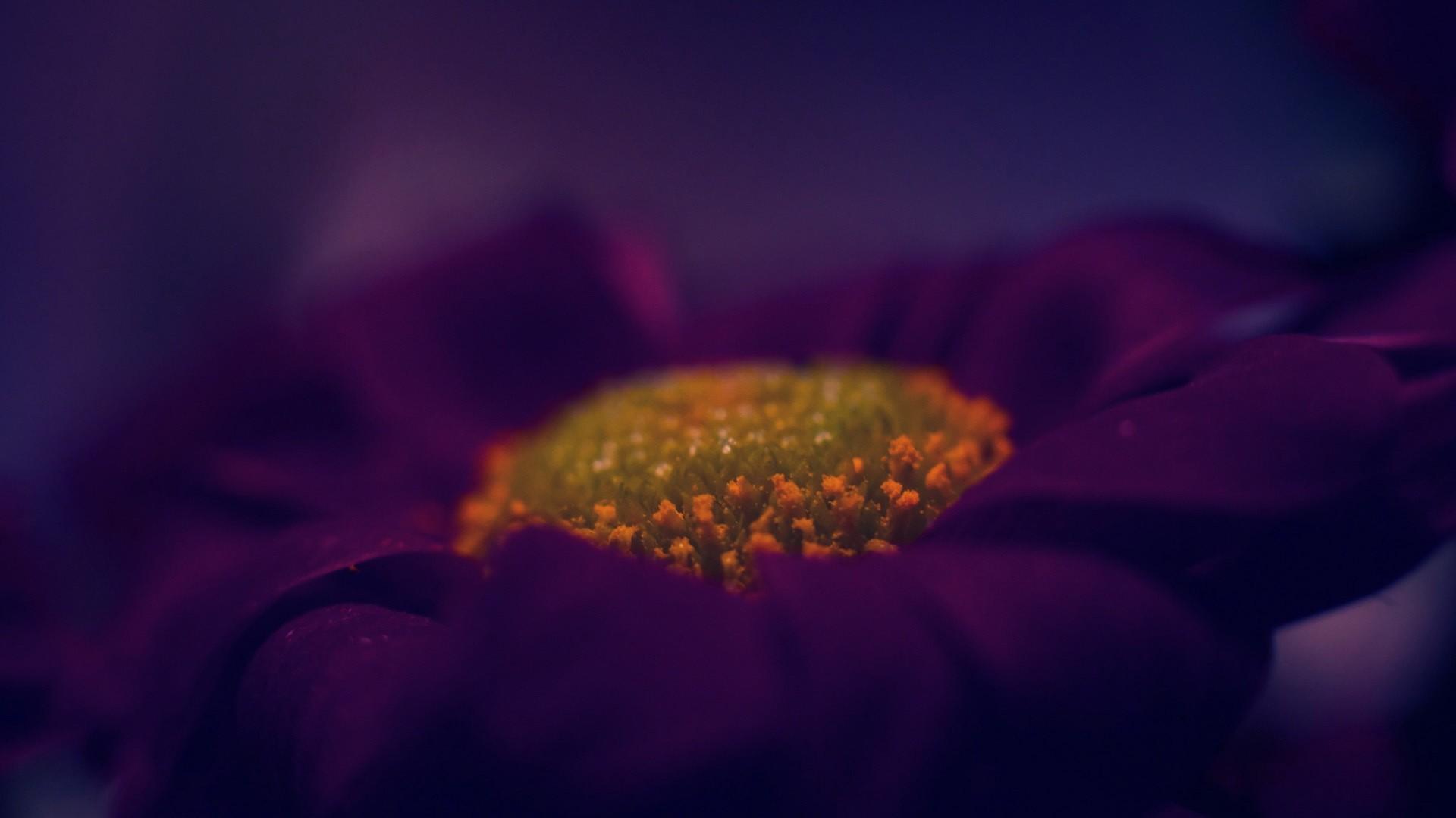 Fantastic Purple Macro Wallpaper