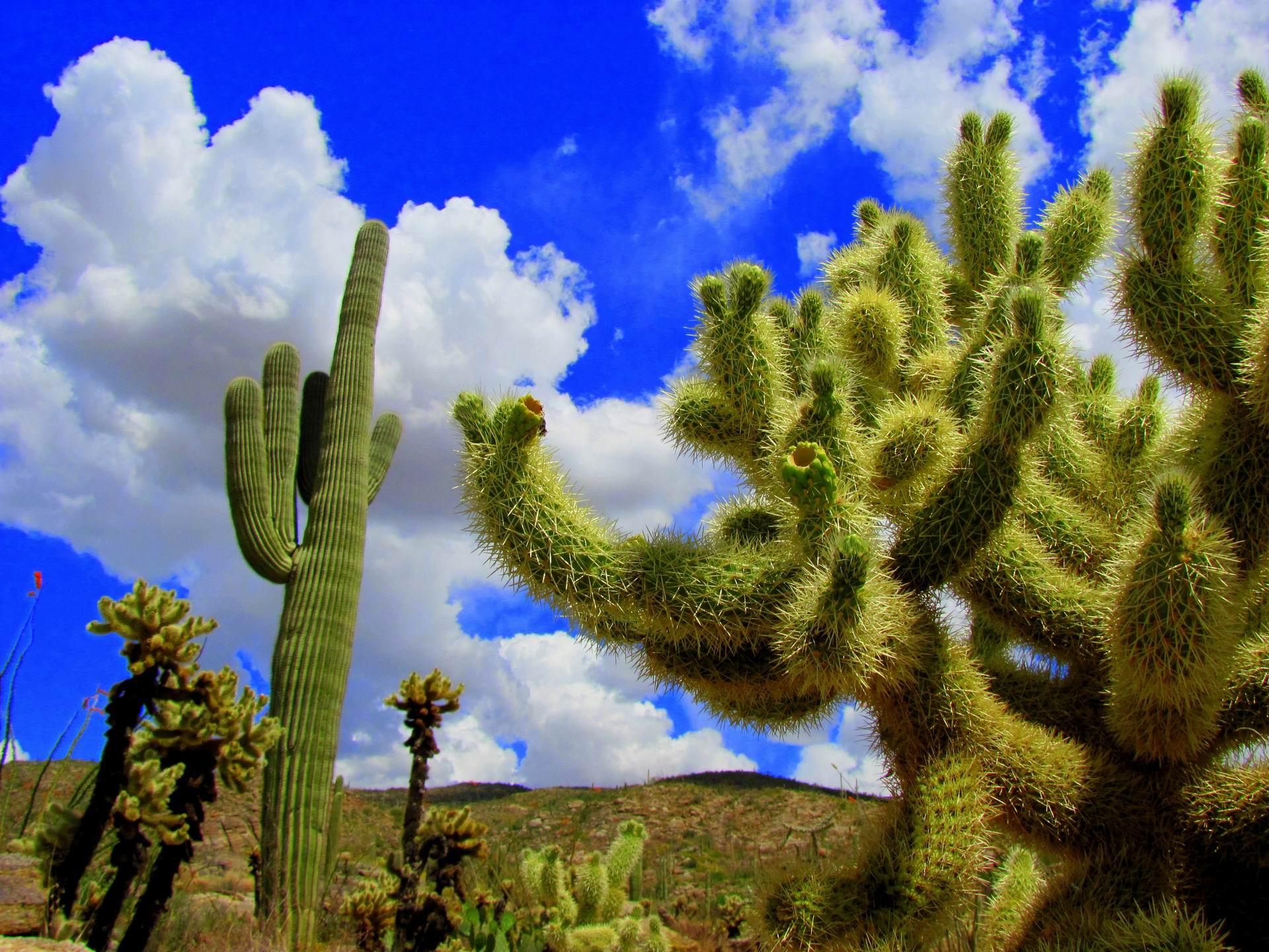 Fantastic Saguaro Wallpaper 41780 3600x2400 px