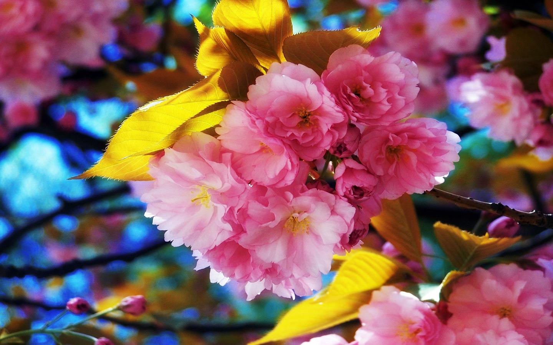 Fantastic Spring Background